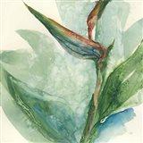 Exotic Flower III Art Print