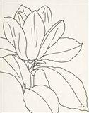 Magnolia Line Drawing v2 Crop Art Print