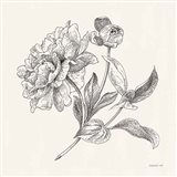 Flower Sketches I Art Print