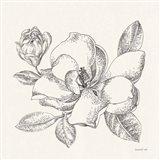 Flower Sketches II Art Print