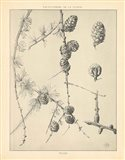 Vintage Tree Sketches II Art Print