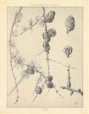 Vintage Tree Sketches II Art Print