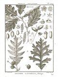 Histoire Naturelle Botanique I Light Art Print