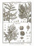 Histoire Naturelle Botanique II Light Art Print