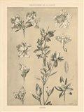 Lithograph Florals I Art Print