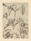 Lithograph Florals II Art Print