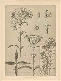 Lithograph Florals III Art Print