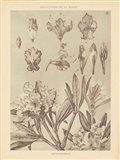 Lithograph Florals IV Art Print