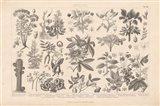 Botanik I Vintage Art Print