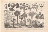 Botanik II Vintage Art Print