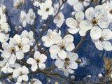 Cherry Blossoms I Indigo Crop Art Print