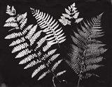 Nature by the Lake Ferns II Black Crop Art Print