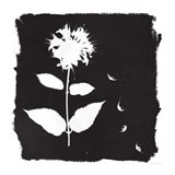 Nature by the Lake Flowers II Black Art Print