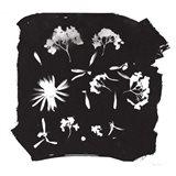 Nature by the Lake Flowers IV Black Art Print