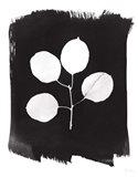 Nature by the Lake Leaves II Black Art Print