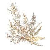Pacific Sea Mosses XII White Sq Art Print