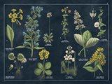 Botanical Floral Chart I Dark Blue Art Print