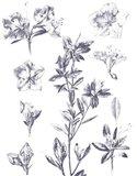 Lithograph Florals I Blue Art Print