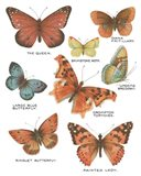 Botanical Butterflies Postcard IV White Art Print
