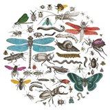 Insect Circle I Bright v2 Art Print