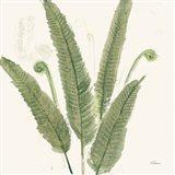 Forest Ferns II Dark Art Print