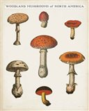 Mushroom Chart III Light Art Print