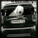 Paris Dog I Art Print