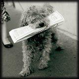 Paris Dog II Art Print