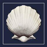 Coastal Shell II with Border Navy Art Print