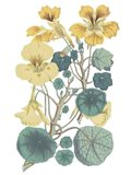 Antique Botanical XVII Cool Art Print
