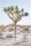 Joshua Tree National Park II Art Print