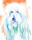 Sheep Dog Art Print