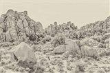 Joshua Tree V Neutral Art Print
