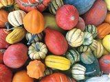 Autumn Bounty Art Print