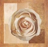 Warm Rose I Art Print