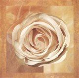 Warm Rose II Art Print