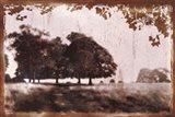 Tree Meadow II Art Print
