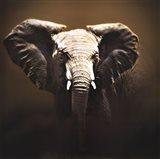 On Safari Art Print