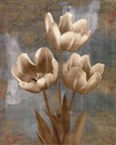 Tulip II Art Print