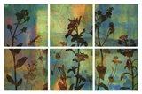 Wild Flowers II Art Print
