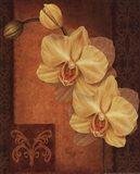 Golden Orchid II Art Print