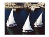 Sailboats in a river, Nile River, Aswan, Egypt Art Print