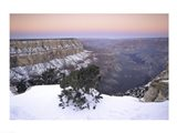 High angle view of a tree on a snow covered mountain, South Rim, Grand Canyon National Park, Arizona, USA Art Print