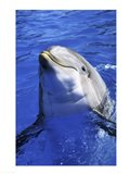 Dolphin - head out of the water Art Print