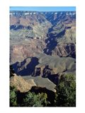 Grand Canyon National Park with Green Trees Art Print