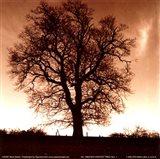 Winter Tree No. 1 Art Print