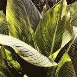 Plant Exploration I Art Print