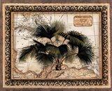 West Indies Palm Art Print