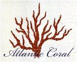 Atlantic Coral Art Print