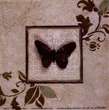 Butterfly Study II Art Print